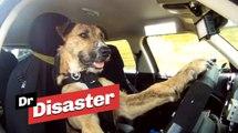 Le premier chien sur terre qui conduit une voiture / Dr Disaster