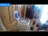 bebeğin altını değiştirmeye yardım eden köpek! her anne adayına lazım:)