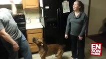 Anne karnındaki bebeği koruyan köpek sikiyorsa yaklas(Nurettin Özdemir)