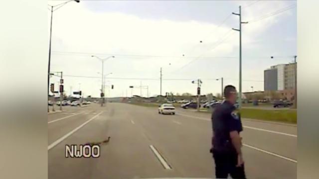 Officer Praised For Helping Ducks Cross the Street