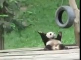 cute Panda Dancing WOW