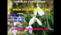kardelen fiyatı, kardelen fiyatları, kardelen çiçeği fiyatı, kardelen çiçeği fiyatları, kardelen çiçeği satışı, kardelen çiçeği satış, kardelen soğanı fiyatı, kardelen soğanı fiy