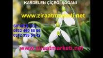 kardelen-fiyatı,kardelen-fiyatları,kardelen-çiçeği-fiyatı,kardelen-çiçeği-fiyatları,kardelen-çiçeği-satışı,kardelen-çiçeği-satış,kardelen-soğanı-fiyatı,kardelen-soğanı-fiyatları,