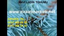 mavi ladin tohumu satış, mavi ladin tohumu satışı, mavi ladin tohumu ankara, mavi ladin tohumu İstanbul