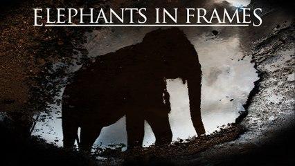 Elephants in Frames - Trailer