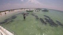 Un banc de lamantins jouent avec les baigneurs!