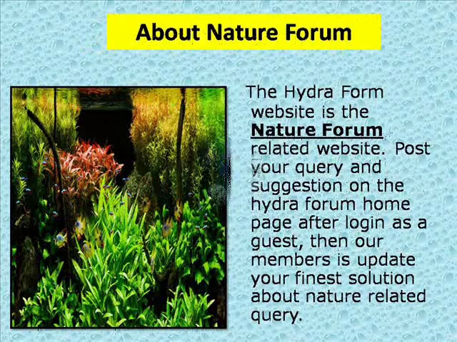 Ponds Forum
