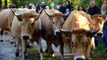 """""""Au cul des vaches"""" de Stéphanie Muzard"""