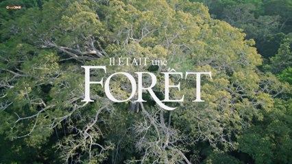 Das Geheimnis der Bäume Teil 1-2