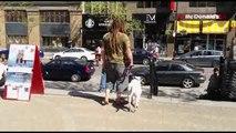 """""""Les chiens de la rue"""" : un documentaire sur les itinérants qui vivent avec un chien à Montréal."""