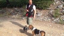 Dressage canin la ciotat 13600 éducation du chien et du chiot