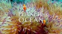 PLANÈTE OCÉAN Trailer [FR] Un film de 90 minutes réalisé par Yann Arthus-Bertrand et Michael Pitiot