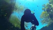 Freediving and Snorkeling in Cenote Jardin del Eden Playa del Carmen Mexico