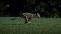 Bir Çitanın Yavaş Çekim Koşuşu