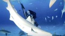 Plonger et nager entouré de requins tigres, sans aucune protection!