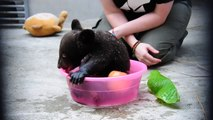 So cute little bear! Adorable cub bathing...