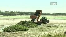 St-Brieuc : Retour des algues vertes dans les Côtes-d'Armor