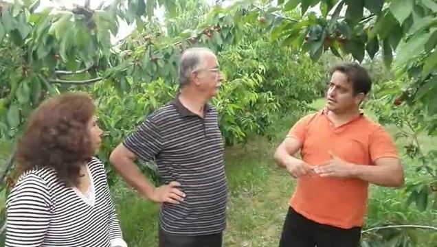 Kuruyan Kiraz Ağacı - Ören limoncuk - Necdet Öztabak