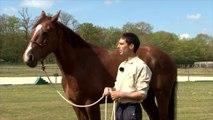Cheval Pratique - J'éduque mon cheval : La confiance