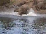Elephant vs crocodile. Combat animal de dingue.