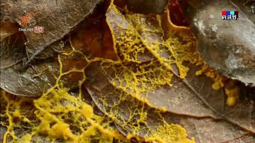 แดนแห่งธรรมชาติสุดขั้ว - ฤดูใบไม้ร่วง 5Jun14