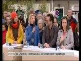 Les Lagotto-Romagnolo du Mas de Rognard