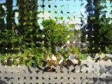 AG3319 Immobilier Tarn. Secteur Cordes sur Ciel. Belle maison renovée, 120m²SH + sous sol, jardin d'environ 700m²