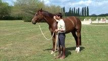 Cheval Pratique - J'éduque mon cheval : Contrôle à distance
