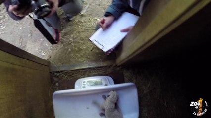 Examen des bébés guépards