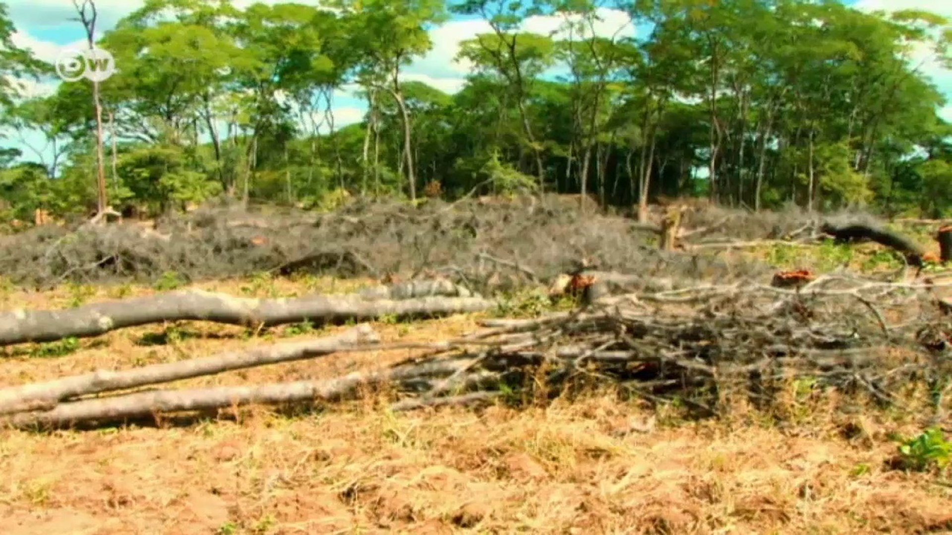 Zambia: Measuring Forests | Global 3000