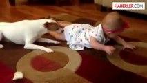 Sevimli Köpekten Bebeğe Emekleme Eğitimi