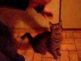 Mon Titi est un chat de cirque ^^