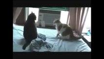 Kedi Reyizden Uçan Tekme