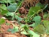Pluies de grêle: nombreux dégâts pour les viticulteurs malgré le dispositif anti-grêle - 30/06