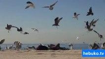 plajda güneşlenenlere yapılan bomba şaka - süper ya :D