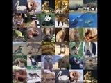 La disparition des grands prédateurs menace toute la planète