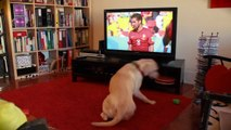 Dog supporting portugal soccer team is so so sad! Hilarious pet...