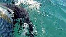 Nager avec des dauphins : un rêve!
