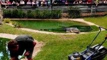 Crocodile ATTACKS Keeper During SHOW at Australia Zoo