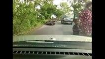 Thaïlande: une invasion de canards bloque une route