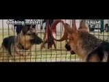 Punjabi Totay  Funny Conversation between Dogs