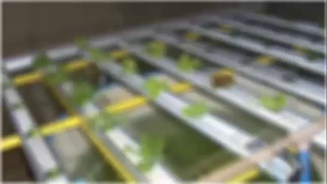 Build Aquaponics, Indoor Aquaponics, Small Aquaponics System, How To Grow Vegetables, Aquaponic Book