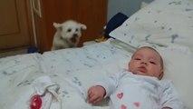 Chien curieux veut voir le nouveau bébé! Trop drôle...