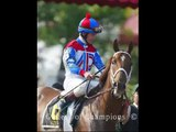 covers sports betting  horse race betting