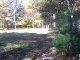 Northeast Pennsylvania Bigfoot Footage