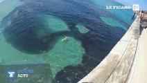 Un énorme banc d'anchois envahit les côtes californiennes