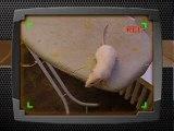 Mon Ti rat ki aimé GxP