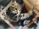 chatons à l'adoption 14 juillet 2014