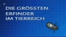 Die größten Erfinder im Tierreich - 2v2 - Geniale Baumeister - 2001 - by ARTBLOOD
