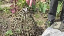 Jardinage : comment protéger son potager des oiseaux?